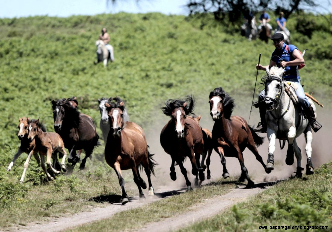 Wild Paint Horses Galloping | Wallpapers Gallery