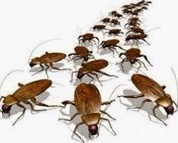 Eliminar-cucarachas