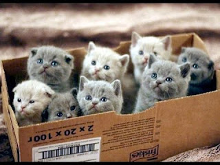 An Intrigue of Kittens in a Box