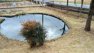 町田市の湧水が鶴見川源流