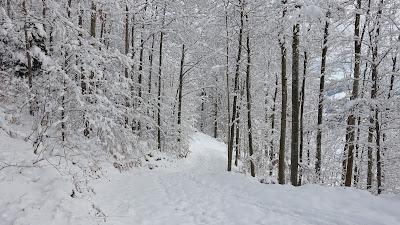Frisch verschneiter Waldweg