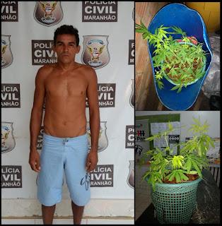 Em Palestina homem é preso por cultivar maconha no quintal de casa
