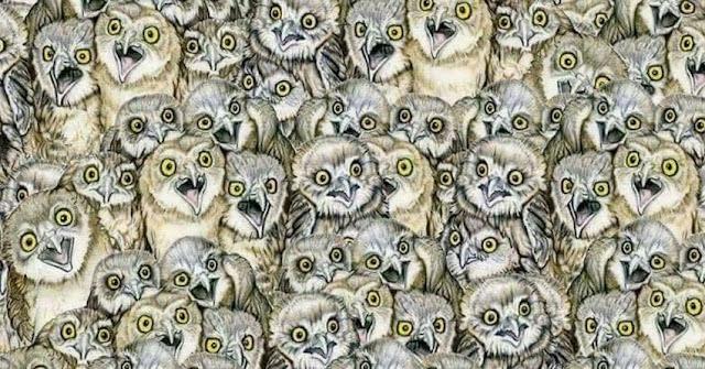 Τεστ γατες