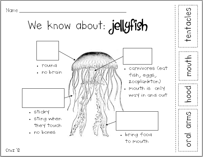my crazy life in kindergarten jellyfish ing. Black Bedroom Furniture Sets. Home Design Ideas