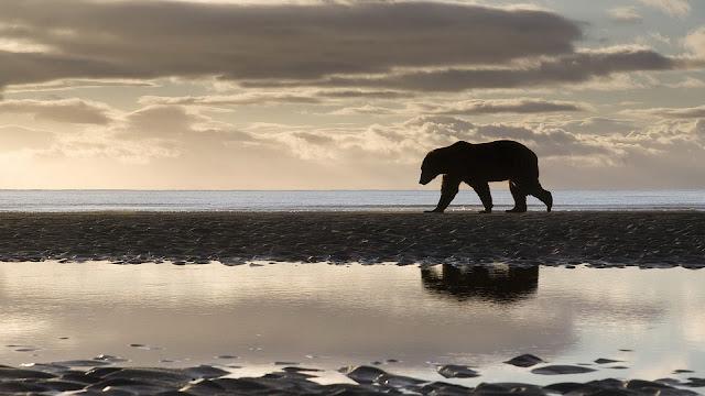 Een ijsbeer op het ijs
