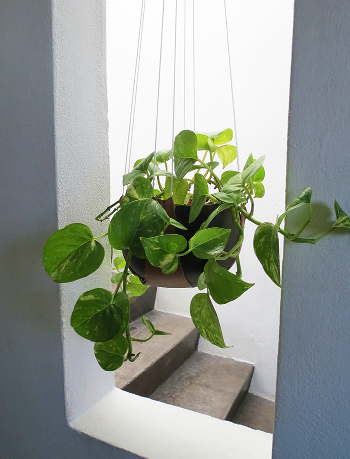 How to make a leather plant hanger