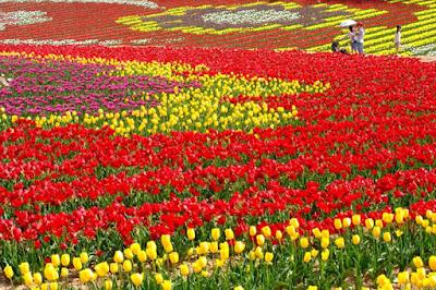 Festival de tulipas na primavera