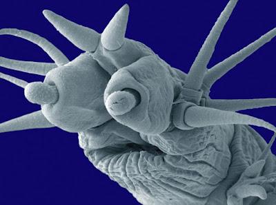 Un altro minuscolo verme marino,   questo con la faccia decisamente più simpatica rispetto a quello della foto precedente.