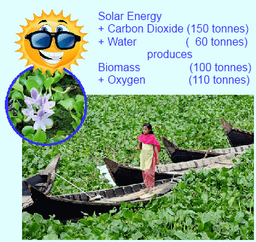 Plants - Nature's Solar Energy Collectors and Renewable Energy Stores