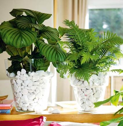 Decorative Clear Glass Plant Pots 4