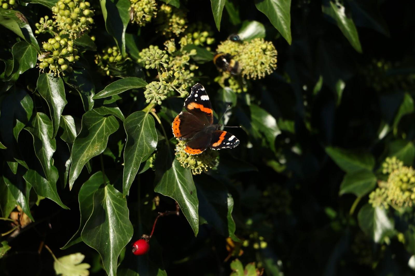 Calderdale Moths Butterflies And Dragonflies Fence 16 2 Butterfly New Peacock