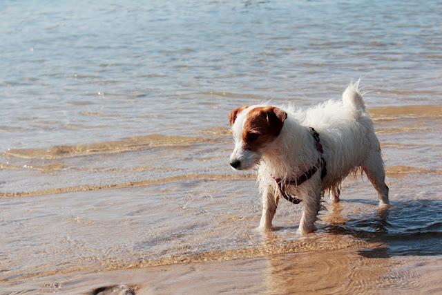 Amy paseando por la orilla