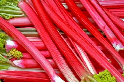 Rhubarb Crown Rheum /'Goliath/' x 3
