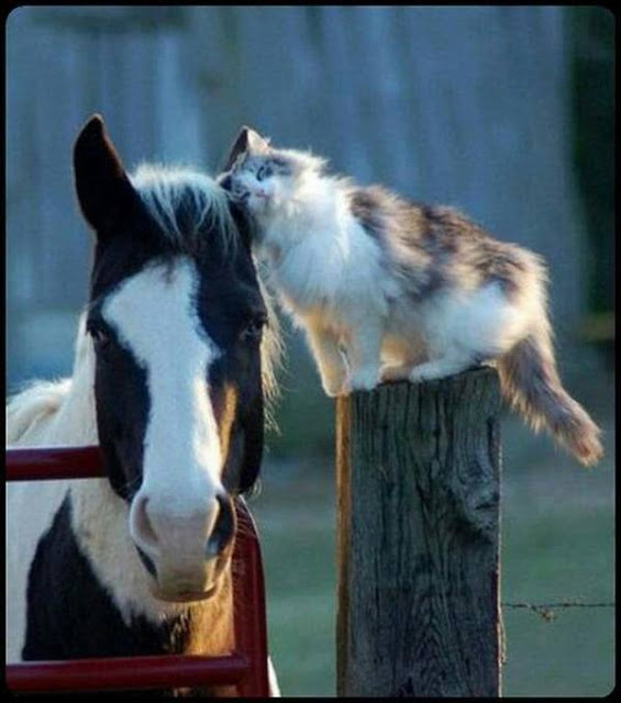 Animals, Friendship between a horse and cats !