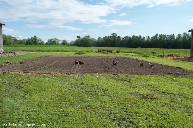Garden prep tilled soil