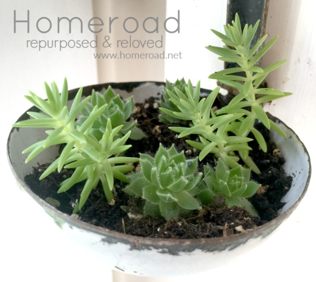 Vintage Ladle Succulent Planter and How to Plant Succulents www.homeroad.net