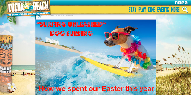 Cocoa Beach Surfing Unleashed Dog Surfing Championship promo image