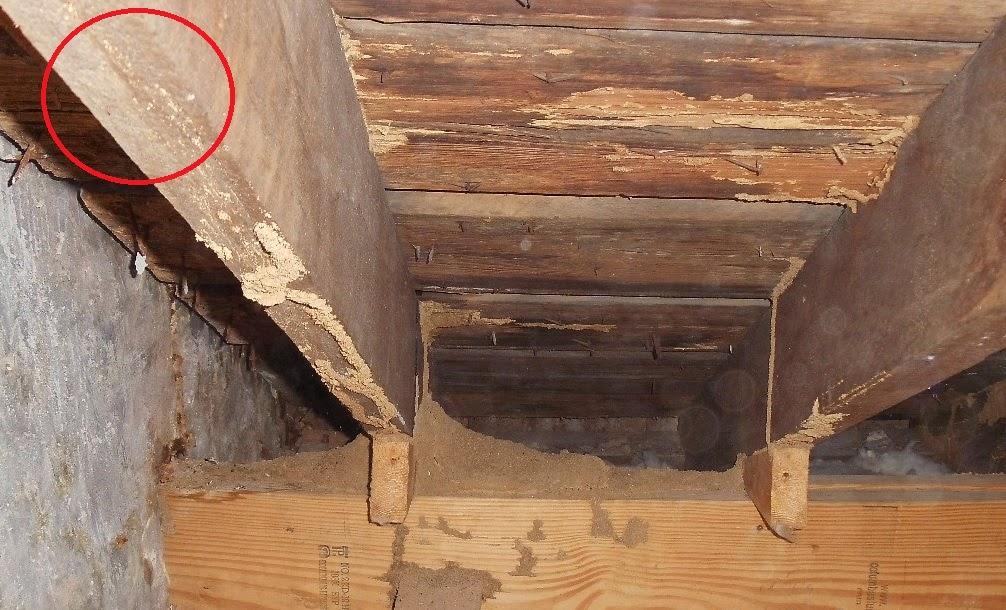 How Do I Identify Termites How Do I Know If I Have Termites
