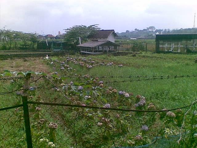 Foto(5094) Jual Tanah Villa | Jual Villa + kebun jual tanah di puncak jual tanah di taman bunga nusantara