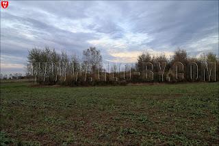 Поле между деревнями Рымаши и Выня. Кусты