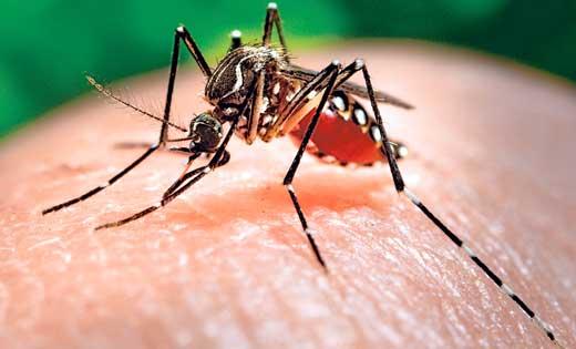 pertanyaan-seputar-virus-zika