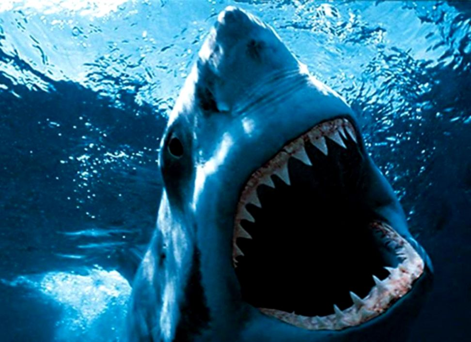 Shark Wallpaper and Background Image 1024x768 ID4947