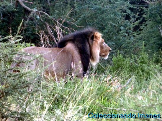 Safari Erindi Namibia