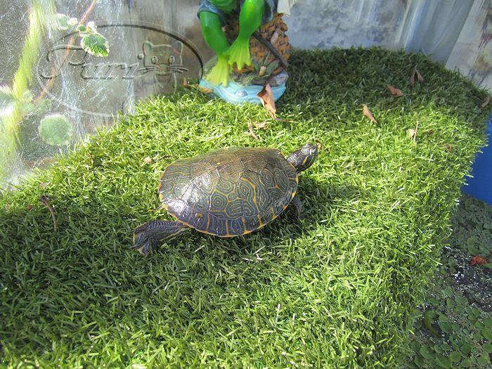 Mi jardin y mi huerto estanque de tortugas - Estanques para tortugas ...