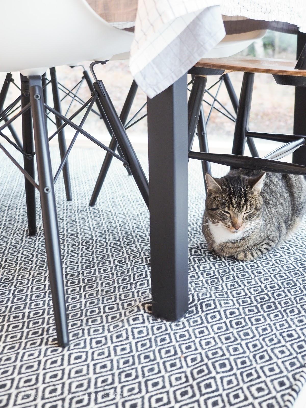Joulu, kissa pöydän alla