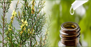 remedios caseros aceite de arbol de te para melanoma