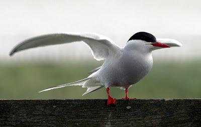 как птицы находят дорогу домой
