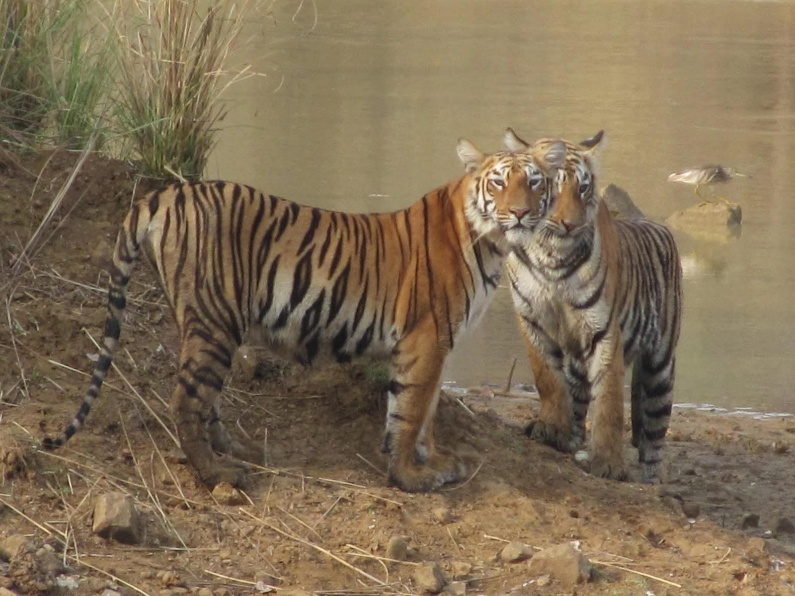 Sawai Madhopur - Rajasthan