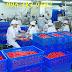 thùng nhựa công nghiệp dày siêu bền, thùng nhựa có chiều dài 610 mm, bán rổ nhựa chữ nhật