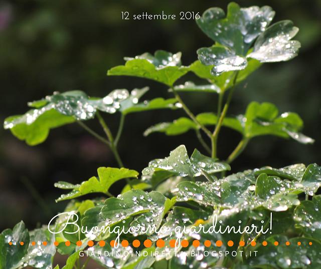 aquilegia - il giardino dalla A alla Z -  i fiori della settimana - un giardino in diretta