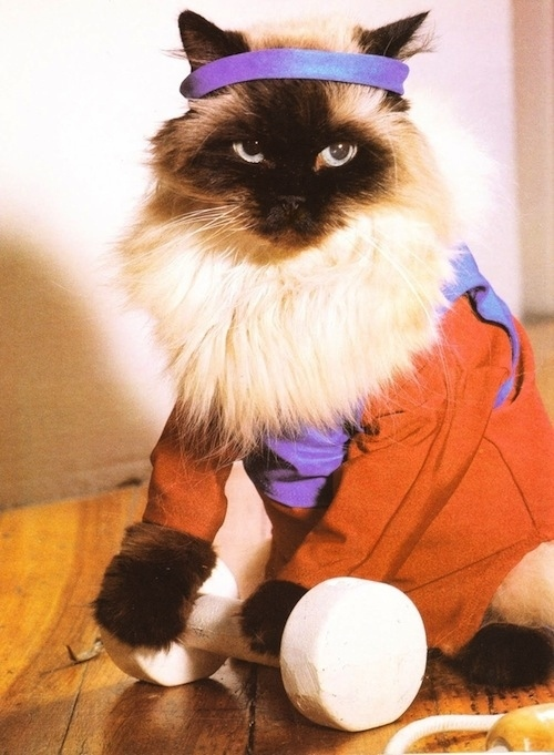 Pictures Of Cats N Dogs Of The 80 S Vintage Everyday