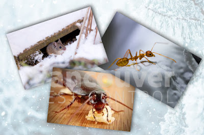 Winter pest control Vancouver