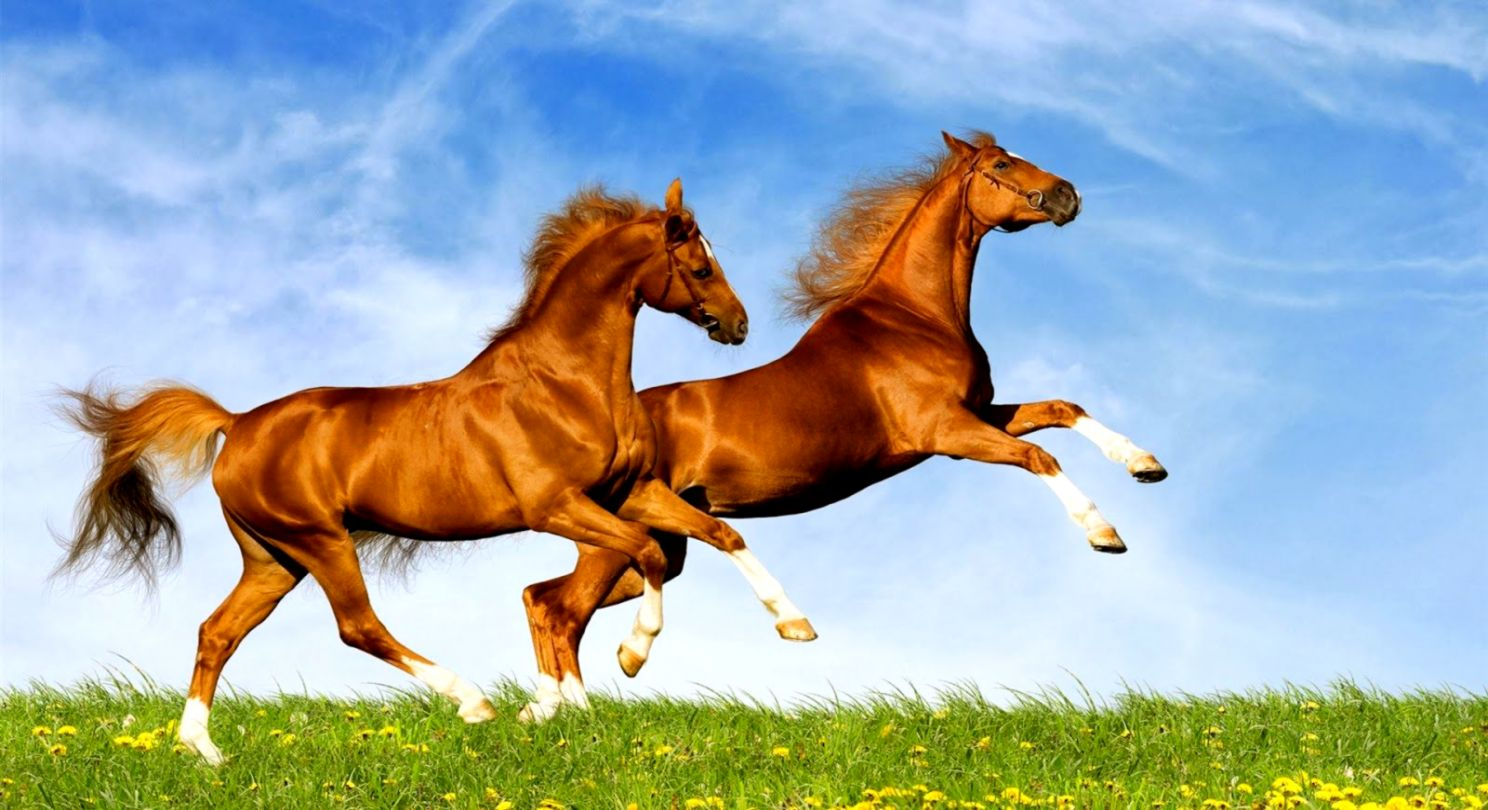 Horses Wallpaper Wallpapers Quality
