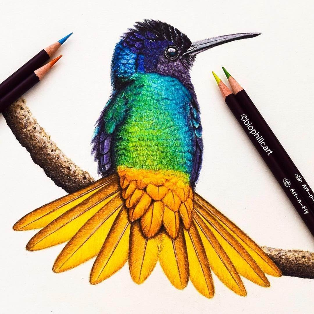 07-Golden-Tailed-Sapphire-Hummingbird-Sallyann-Brightly-Colored-Animal-Pencil-Drawings-www-designstack-co