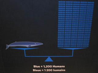 Blue equals 1200 humans or 1437 of a particular human.