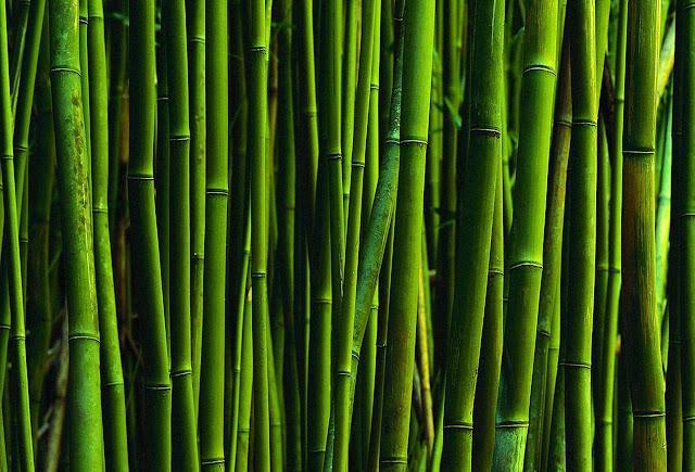 włosy mocne jak bambus