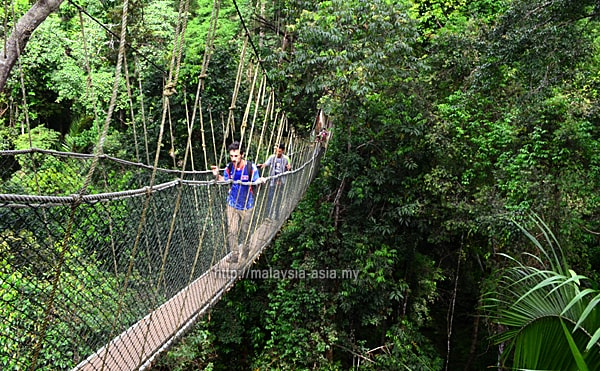 Canopy Walk at Taman Negara