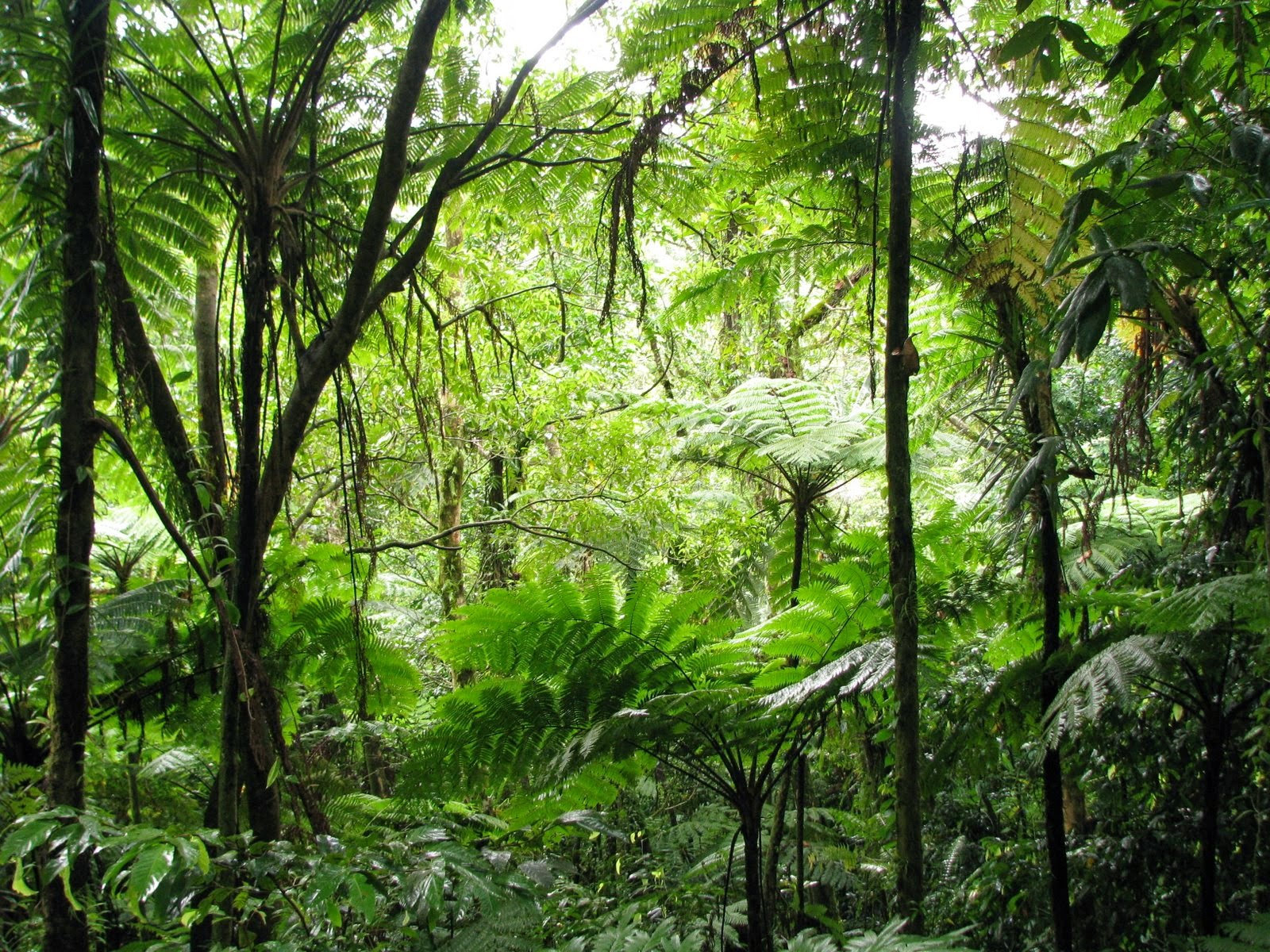 Pohnpei jungle