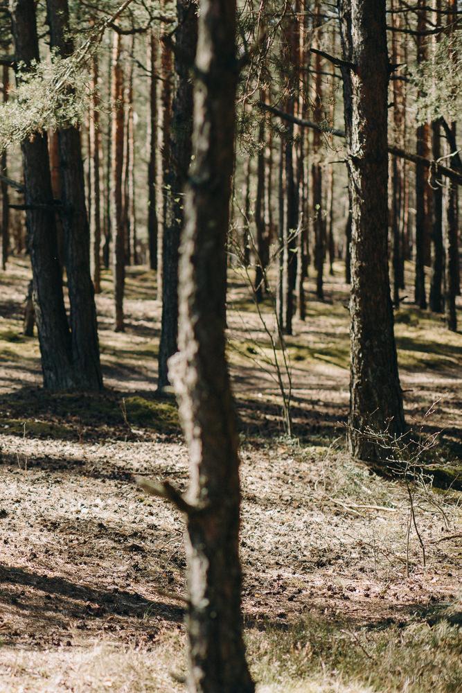 skaists mežs blakus rīgai