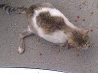 Pengalaman Unik Samirin Terapi Kucing yang Pincang Hingga Normal Kembali