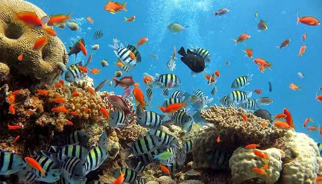 Taman Laut Olele (keindahan bawah laut)