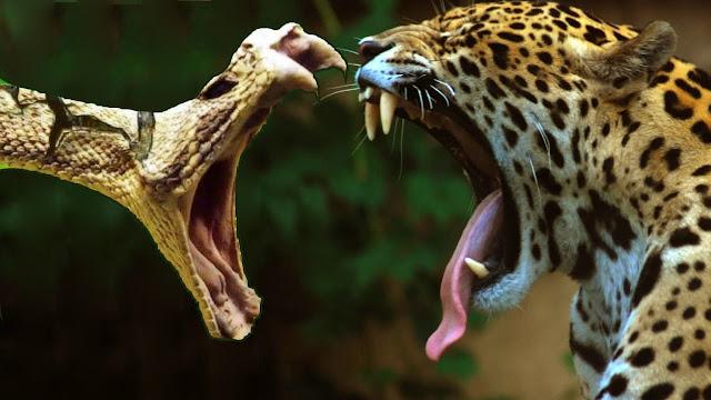 أخطر الكائنات التي تعيش بغابات الأمازون