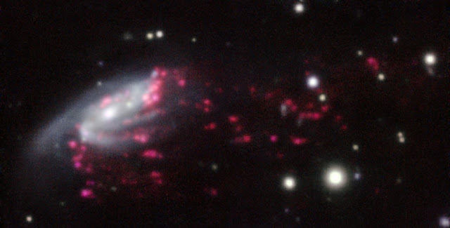 "Observations of ""Jellyfish galaxies"" with ESO's Very Large Telescope have revealed a previously unknown way to fuel supermassive black holes. It seems the mechanism that produces the tentacles of gas and newborn stars that give these galaxies their nickname also makes it possible for the gas to reach the central regions of the galaxies, feeding the black hole that lurks in each of them and causing it to shine brilliantly.  This picture of one of the galaxies, nicknamed JW206, from the MUSE instrument on ESO's Very Large Telescope in Chile, shows clearly how material is streaming out of the galaxy in long tendrils. Red shows the glow from ionised hydrogen gas and the whiter regions are where most of the stars in the galaxy are located.  Credit: ESO/GASP collaboration"