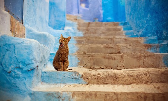 How To Get Rid Of Cat Urine Smell >> Cats from Chefchaouen {Morocco} - Traveling Cats - Travel ...