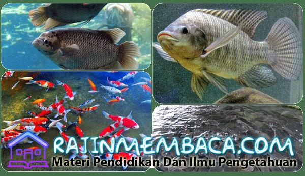 Ikan Air Tawar