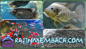 Peluang dan Tentang Budidaya Ikan Air Tawar